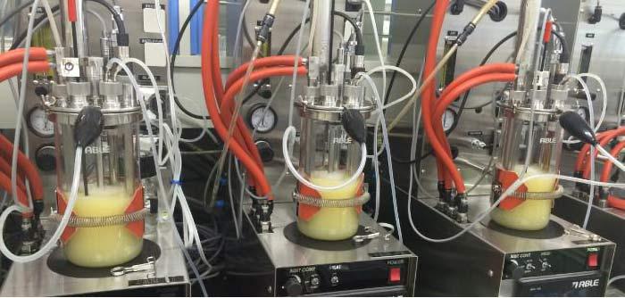 イソプレンの細胞内生産の様子