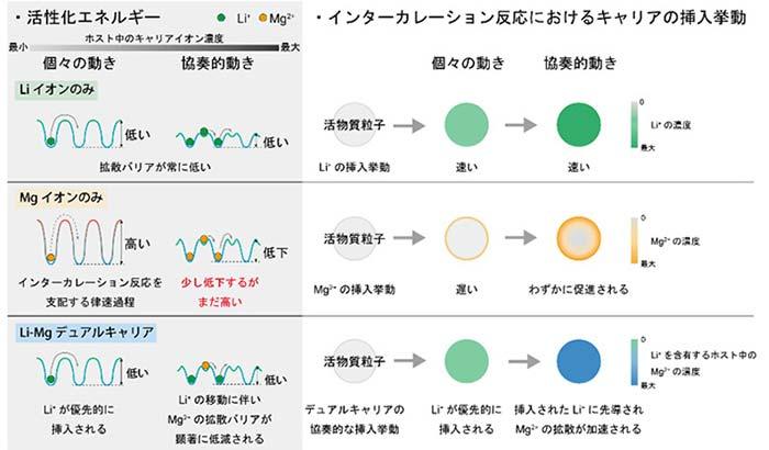 図4. インターカレーション反応における固体内拡散過程