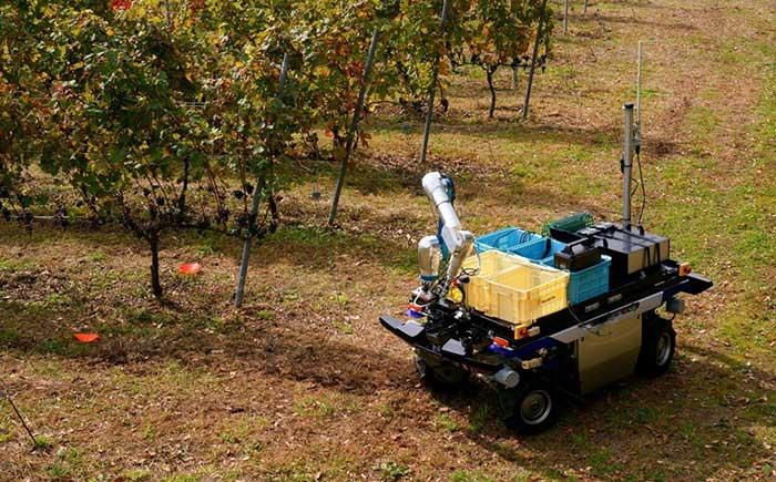 ブドウ畑で自動走行するUGV。